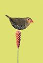 Vogelkaart 2