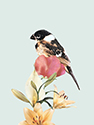 Vogelkaart 3