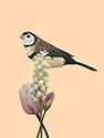 Vogelkaart 5
