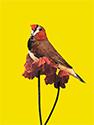 Vogelkaart 10