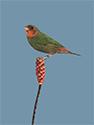 Vogelkaart 6