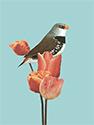 Vogelkaart 7